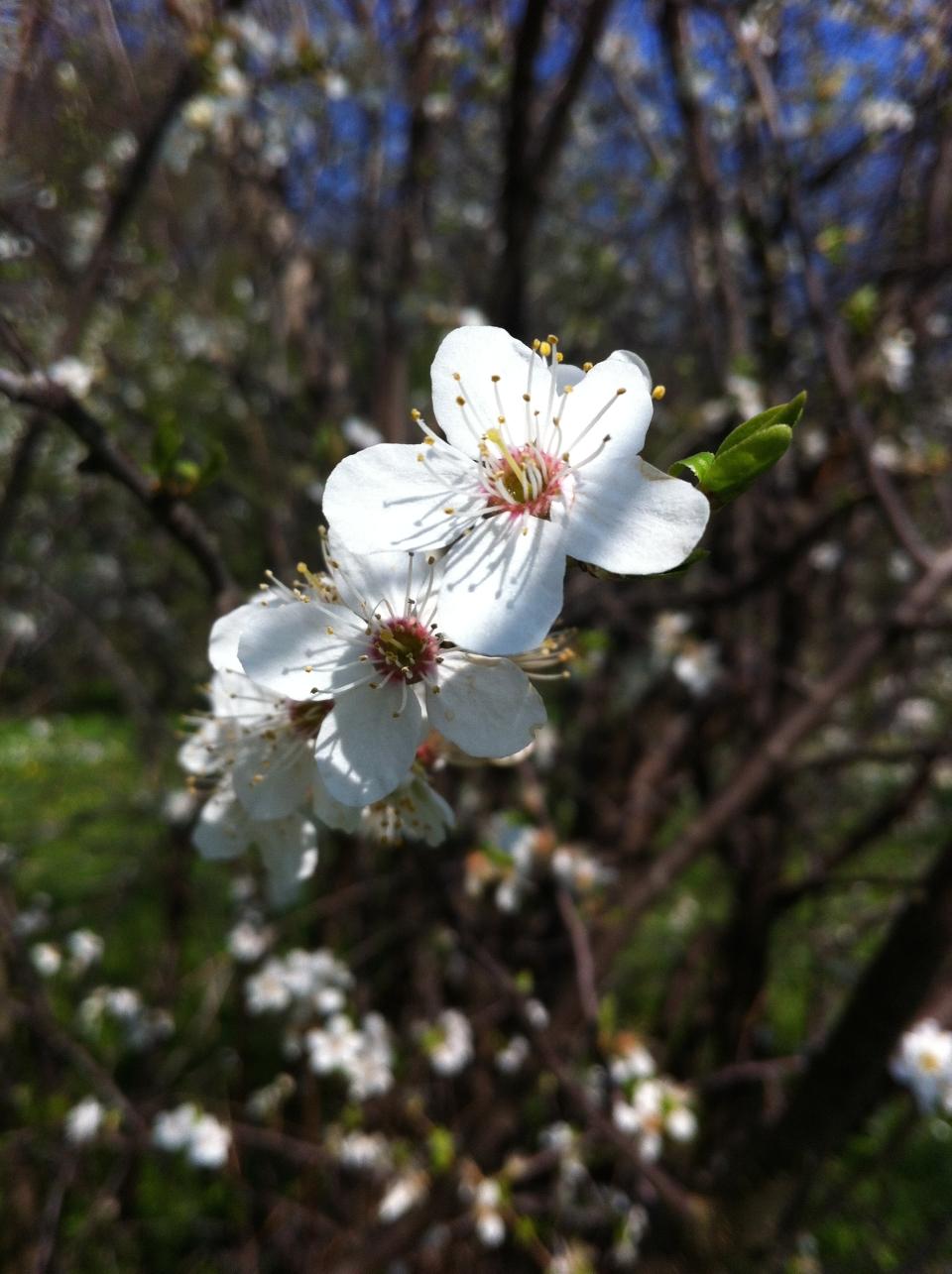 wiosna.kwitnie